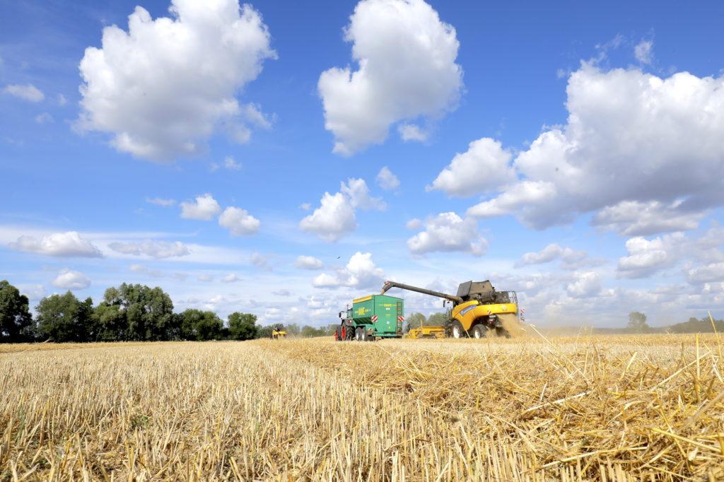 Mähdrescher belädt Schlepper mit geerntetem Getreide