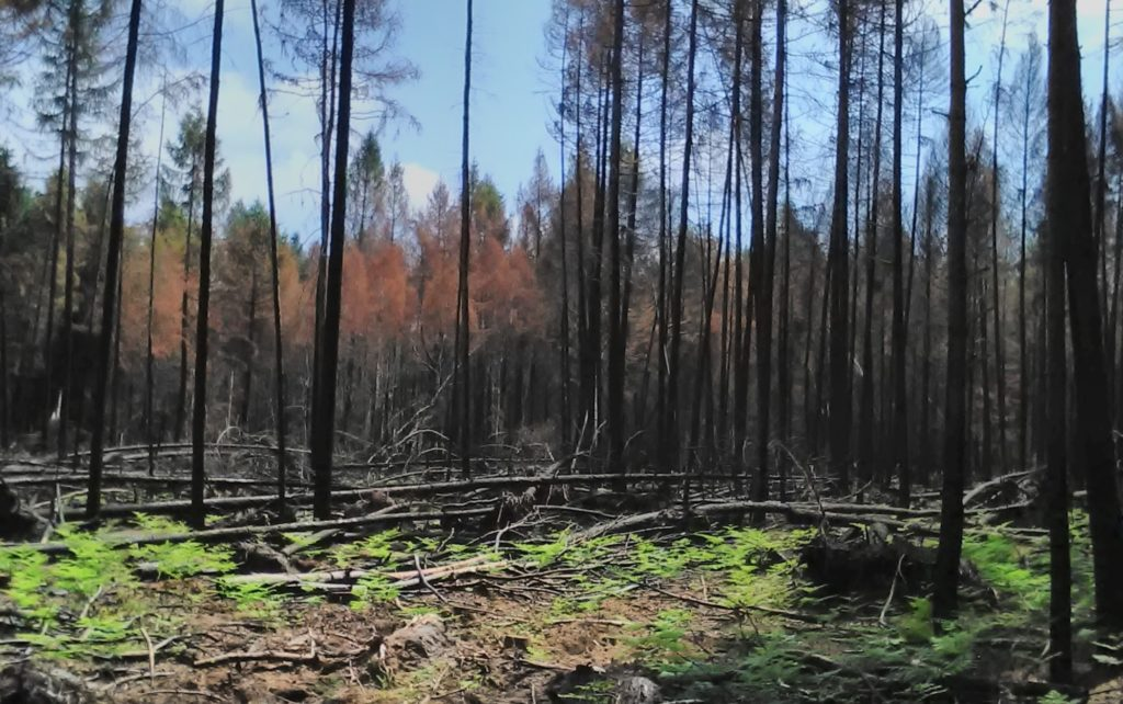 Brandschaden bei Bad Wilsnack 2018 in Privat- und Stadtwald