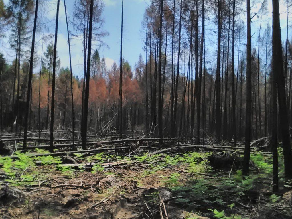 Brandschaden bei Bad Wilsnack 2018 in Privat- und Stadtwald.