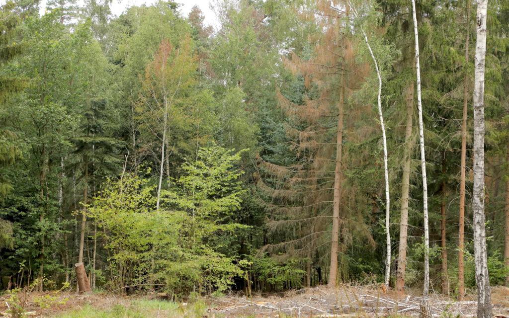 Waldschäden in Sachsen-Anhalt