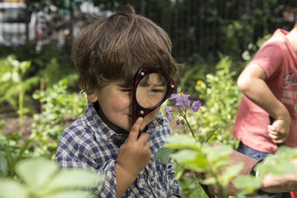 Ein Kita-Kind erforscht die Natur in der Ackerdemia