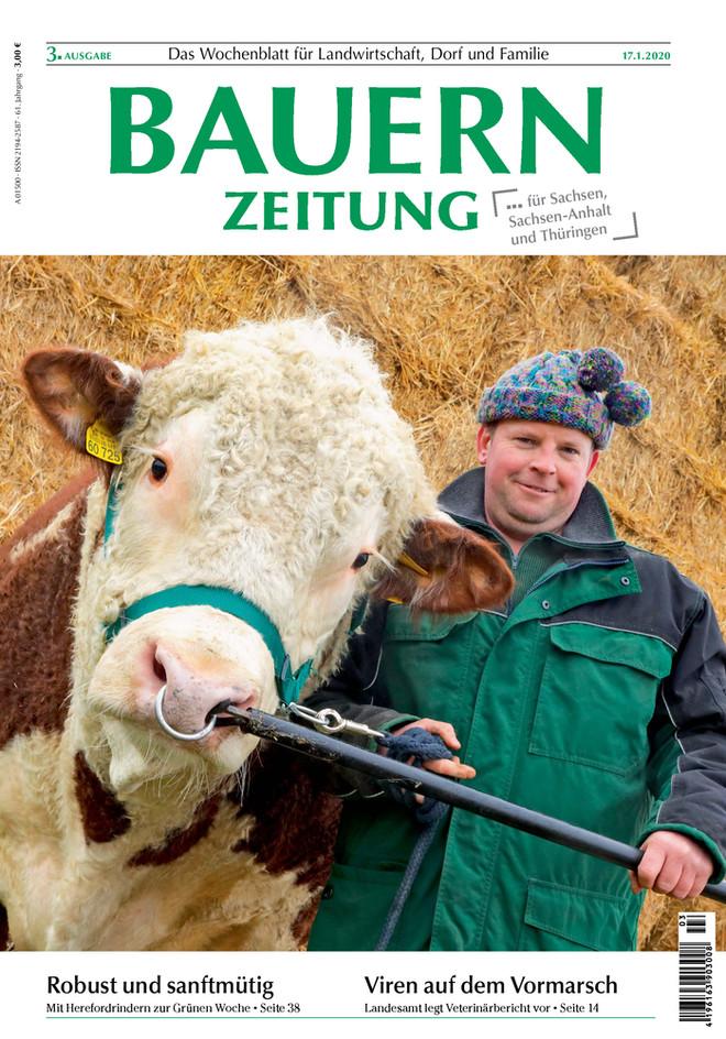 Hereford-Rinder Brandenburg Titelfoto Bauernzeitung
