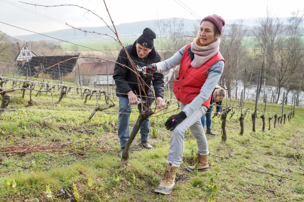 Rebschnitt lernen im Landesweingut Kloster Pforta
