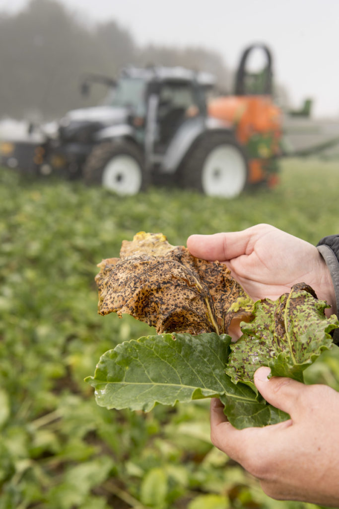 Sensoren Zuckerüben Pflanzenschutz