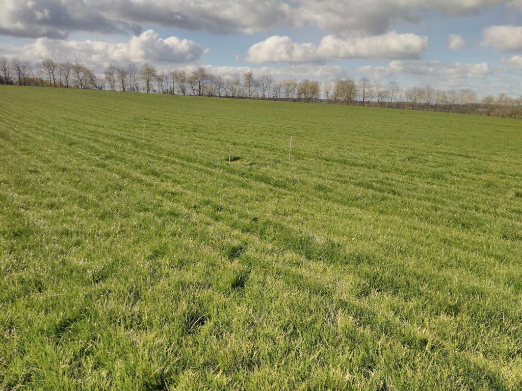 Die Probefläche auf diesem Ackergrasschlag in Zarnekow bei Demmin befindet sich repräsentativ mitten im Bestand. Foto: Wieland Niecke