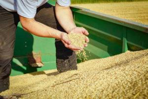 Brennpunkt Getreidemarkt Getreide Weizen