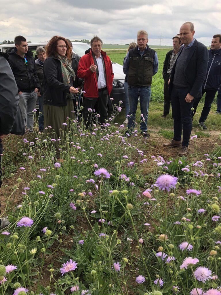 Eine Gruppe von Menschen steht am Rande eines Feldes, das zur Wildpflanzenvermehrung genutzt wird. Rechts steht der sächsische Landwirtschaftsminister.