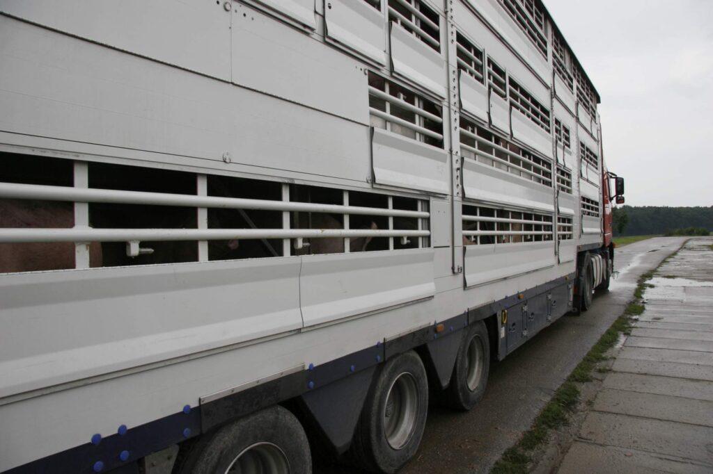 Ein weißer Tiertransportwagen.