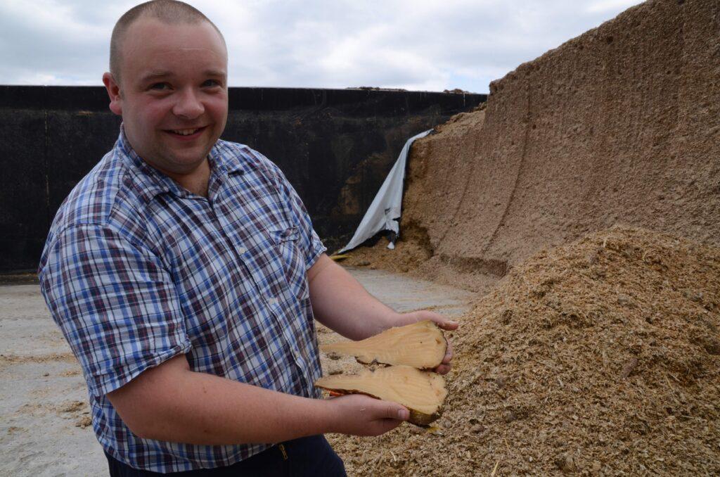 Landwirt Thomas Wirth zeigt eine Zuckerrübe, die mit dem Mais siliert worden ist.
