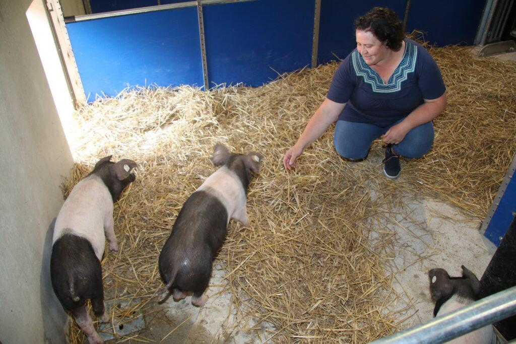 Läufer vom Sattelschwein bezogen als erste Quartier im neuen Stall, so Anlagenleiterin Marianne Zenk.