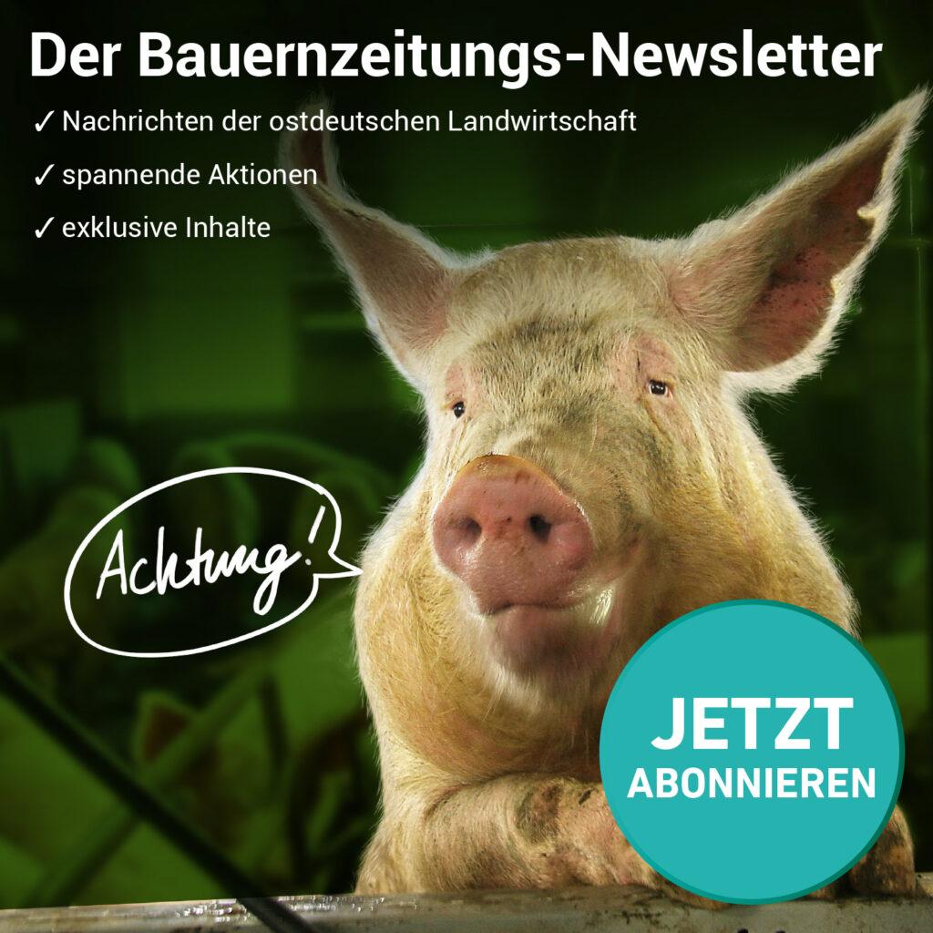 Schwein sagt Achtung! und weist auf Newsletter hin