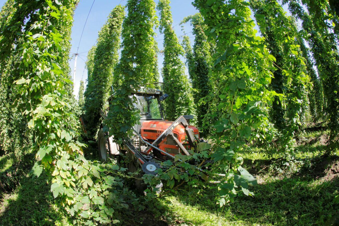 Ein Traktor bei der Hopfenernte.