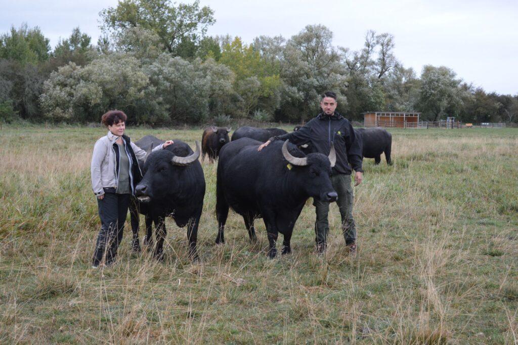 Bei den Wasserbüffeln: Geschäftsführerin Silke Fischer und Vorstand Michael Daul von der Agrargenossenschaft Emden.